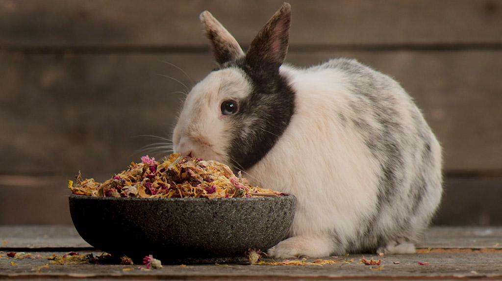 bunnyNature »all nature BOTANICALS«