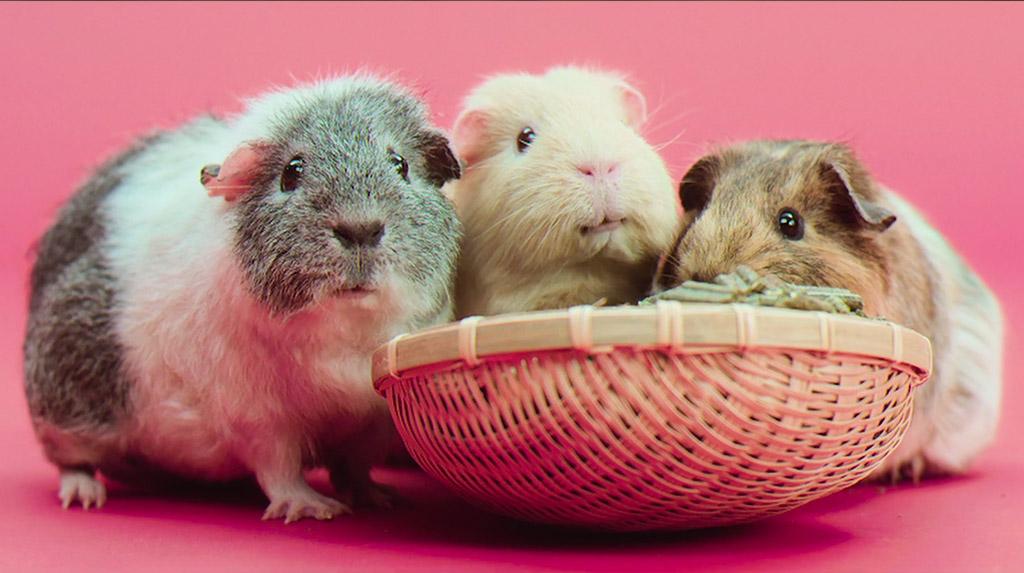 bunnyNature TriMellos®